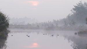 Zonsopkomt en eenden in de mist in het Haaksbergerveen