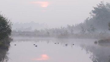 Zonsopkomt en eenden in de mist in het Haaksbergerveen van Art Wittingen