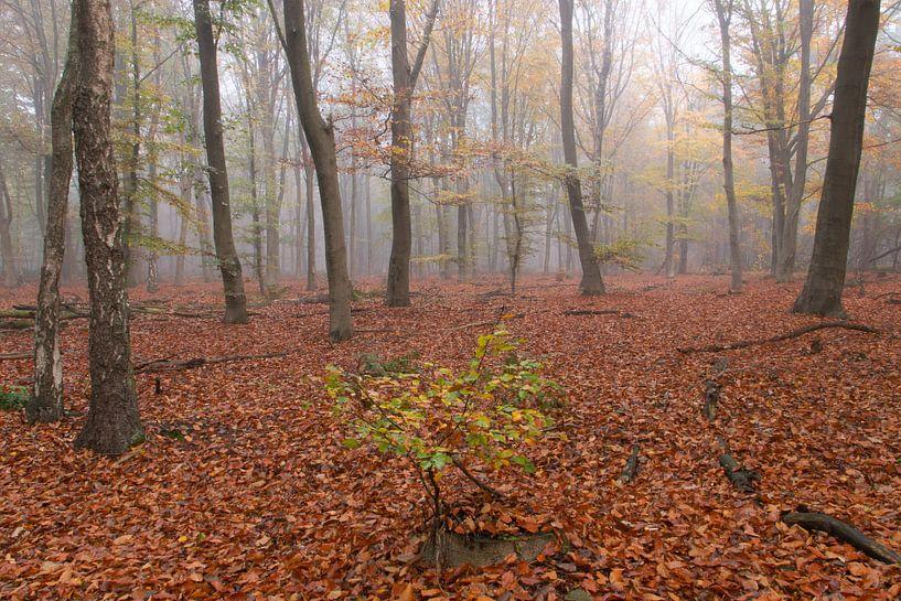 Nebliger Wald von Geert Brosens