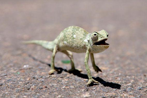 Overstekende Kameleon