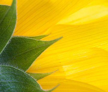 Detail einer Sonnenblume von BYLDWURK BYLDWURK