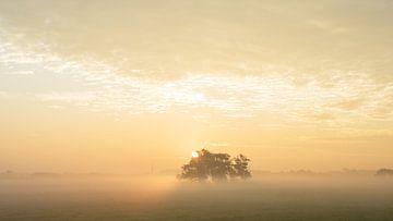 zonsopgang met mist sur Dirk van Egmond