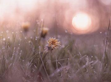 bloemen part 115 van Tania Perneel