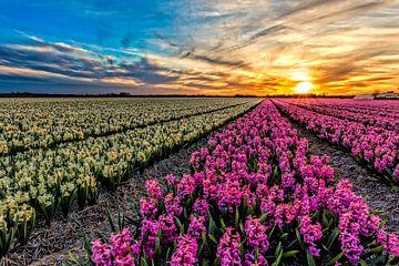 zonsondergang boven de bollenvelden van eric van der eijk