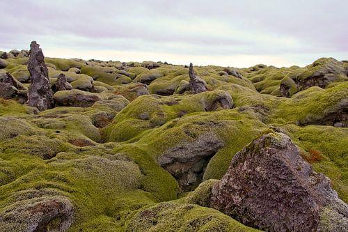 Neverending lavafiels on Iceland van