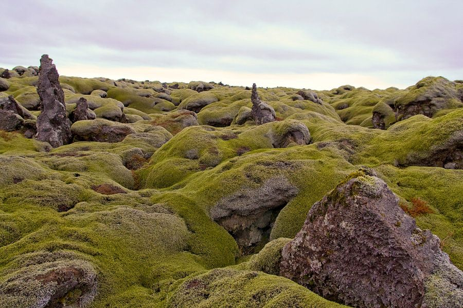 Neverending lavafiels on Iceland