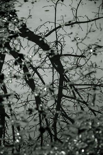 Weerspiegeling boom en takken in water van