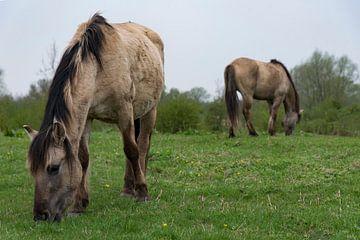 Paarden bij de Blaauwe Kamer 01 van Cilia Brandts