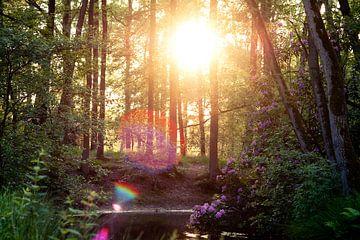Wald mit Bokeh von Laura Vink