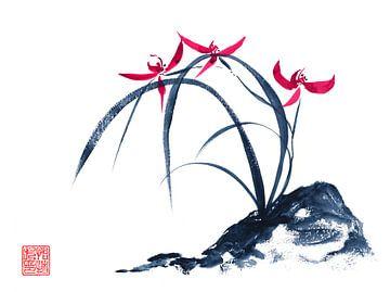 Rote Orchidee van