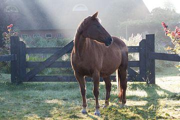paard in nevelige zomerochtend van By Foto Joukje