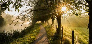 Panorama d'un sentier de randonnée par un matin follement brumeux.