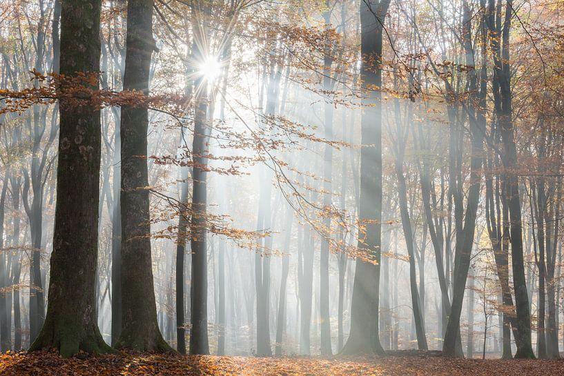 Herbstwald im Nebel von John Verbruggen