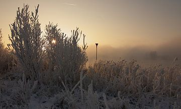 Magical morning von Miranda Lodder