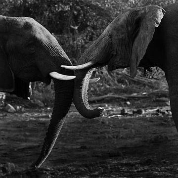 2 olifanten met de koppen tegen elkaar. von Arthur van Iterson