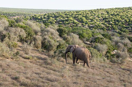 afrikanische elefanten bilder auf leinwand poster bestellen ohmyprints. Black Bedroom Furniture Sets. Home Design Ideas