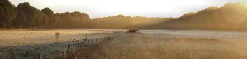 panorama weiland van Jeroen Grit