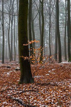 Farbe in einer grauen Landschaft auf der Veluwe von Kelvin Middelink