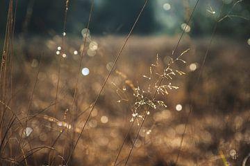 Gras in diepte en bokeh