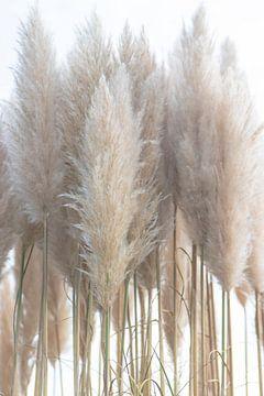 Pampas-Gras von Alma Rutten