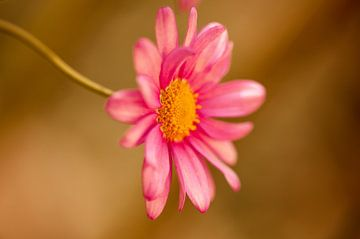 Gartenblume von Alena Holtz
