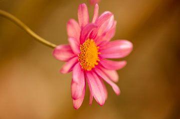 Gartenblume van Alena Holtz