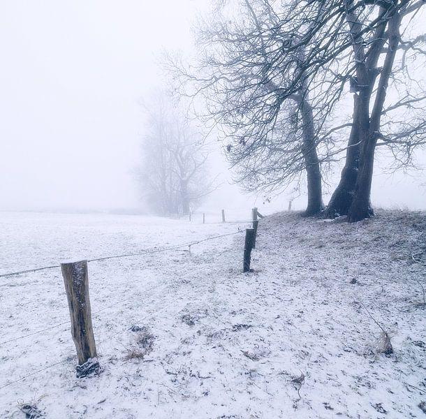 Misty Morning van Martijn Schornagel