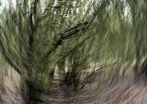 Wind 3 van
