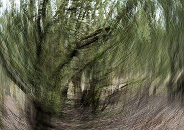 Wind 3 van Lein Kaland