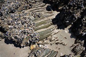 Schelpen en rots op het strand van Bretagne van