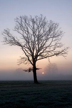 Kahler Baum im Nebel von Anja Uhlemeyer-Wrona