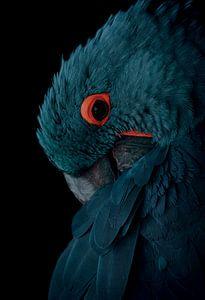 Blauer Ara mit Vintage-Farbschema