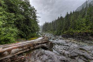 Boomstronk in de rivierbedding van Jaap Voets