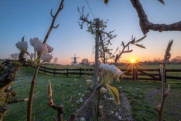 Sonnenaufgang blühen und den Schmetterling mahlen von Moetwil en van Dijk - Fotografie