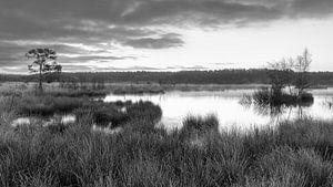 Nationaalpark Dwingelderveld van Marga Vroom
