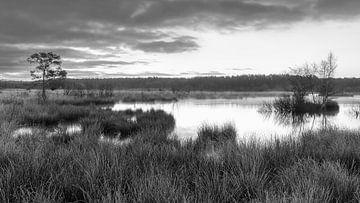 Nationalpark Dwingelderveld von Marga Vroom