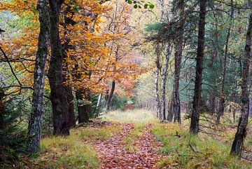 wandelpad in de natuur