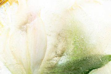 Ice Flower von Nanda Bussers