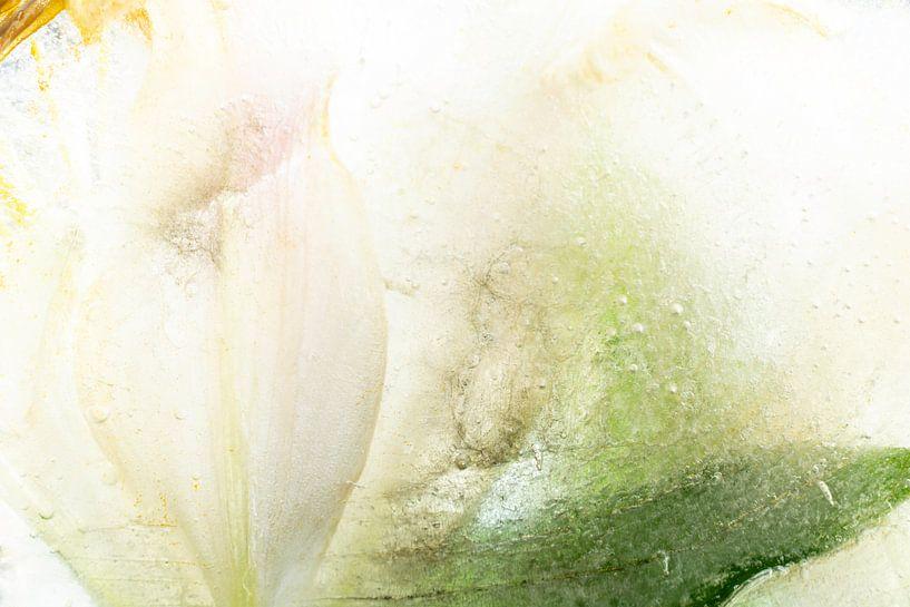 Ice Flower van Nanda Bussers