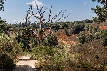 Karkas van dode boom in Veluwe landschap van Mayra Pama-Luiten