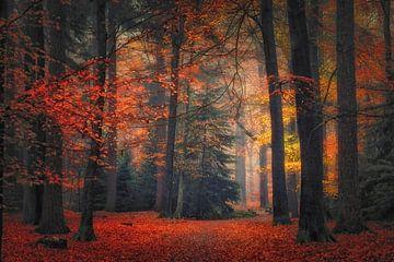 Herfst Droom. Autumn dream. Published van Saskia Dingemans