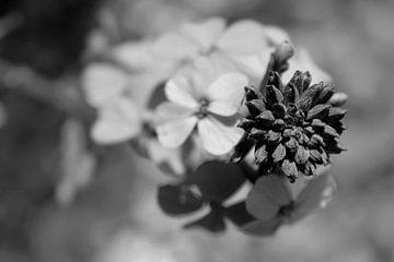 zen flower von geen poeha