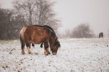 grasend im Schnee von Tania Perneel