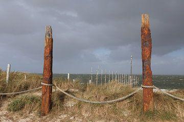 Rotten Pfähle in den Dünen auf Texel von Arjan Groot