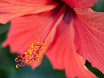 Groze roze bloem. von Mariëtte Plat