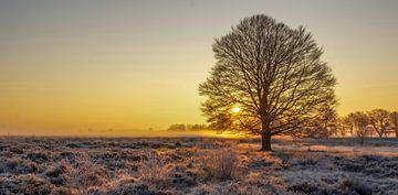 Sonnenaufgang in der Edeser Heide, Ede, Niederlande von Nico  Calandra