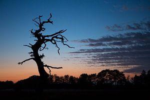 Dode boom met bijzondere lucht bij zonsondergang