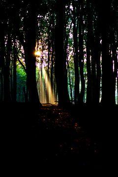 Herfstglorie van de Veluwe - Bos nr. 2