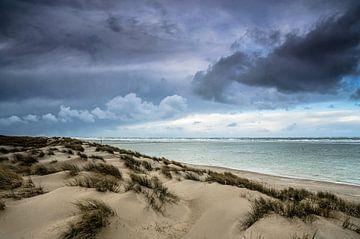 Hollandse duinen | Texel van