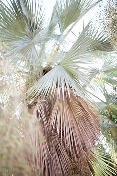 Palmiers en Espagne sur Robin Polderman